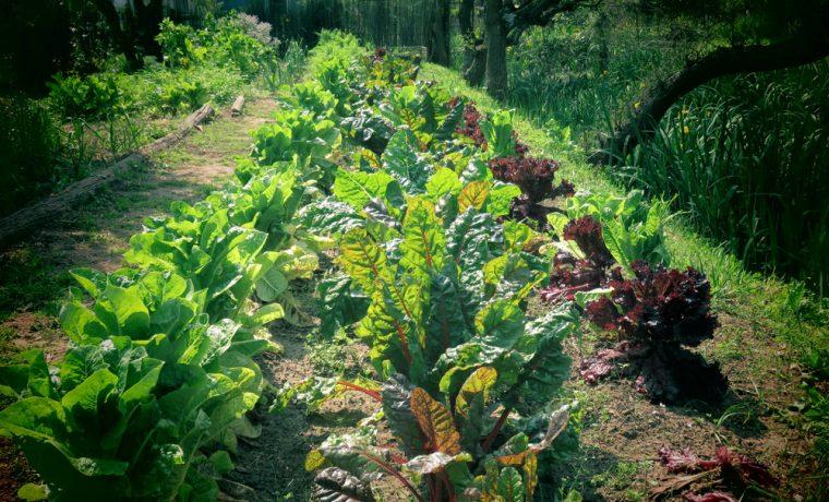 Se creó en Argentina la Dirección Nacional de Agroecología
