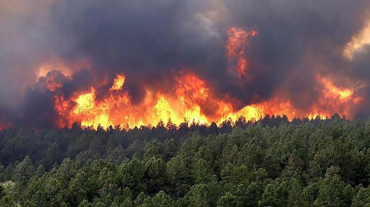 El IMiBio advierte que con los incendios Misiones corre el riesgo de perder de forma irreparable al menos 25 especies