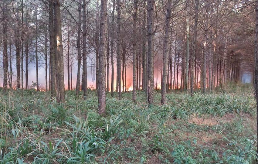 Un detenido y tres notificaciones por los incendios registrados en la provincia